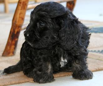 October Puppy 1